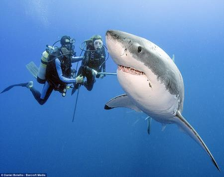 Two People and a Great White Shark
