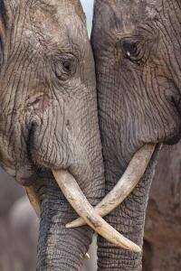Elephants Have Souls