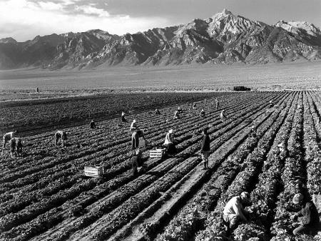 Farm Workers Mt Williamson- Ansel Adams