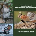 KNOW Your Member of the Family Sciuridae
