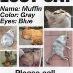 Missing Cat/Dog/People Signs