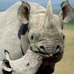 Rhino Horror Story