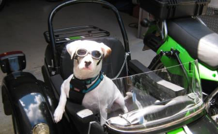 Cool Motorcycle Dog