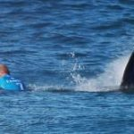 Mick Fanning and the Curious Shark