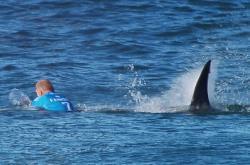 Mick Fanning and Shark
