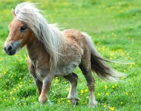And a pony