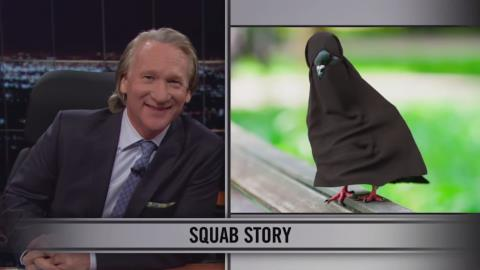Pigeon in a Burka