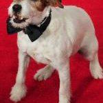 Wonderful Terriers in Film
