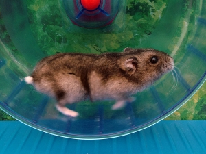 Hamster on Spinning Wheel - This is life