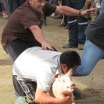 Greased Pig Chases Aren't Allowed! Except They Are