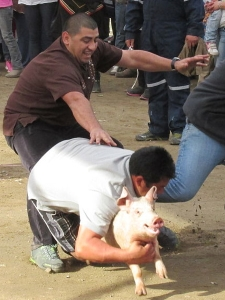 Greased Pig Chase