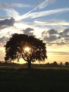 Sunrise - Actinism