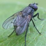 Ethics, Nightmares, and Killing a Fly