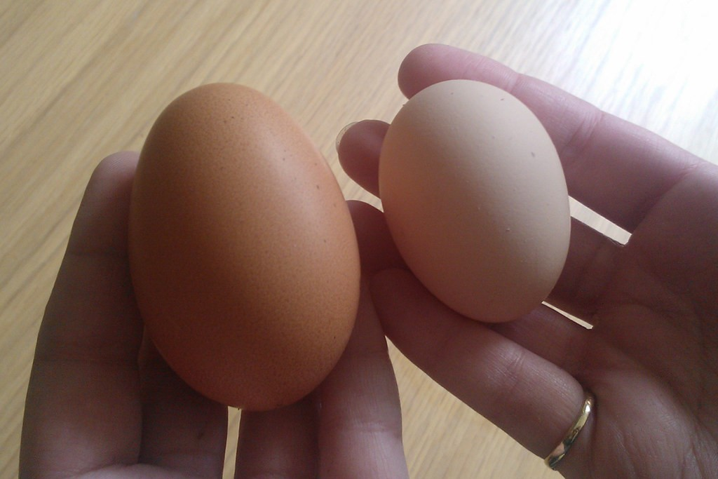 Double Yolk Comparison